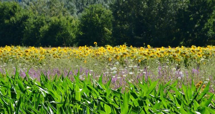 Fiori Gialli Toscana.Campagna Toscana Passeggiata Rigenerante Nella Natura