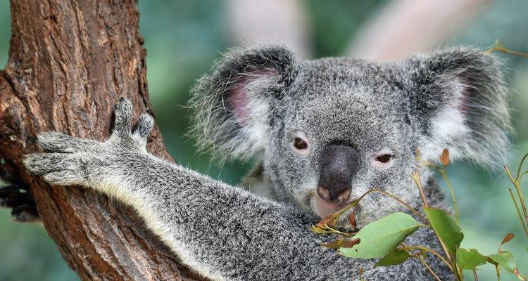 Siti Web di incontri gratuiti in Australia